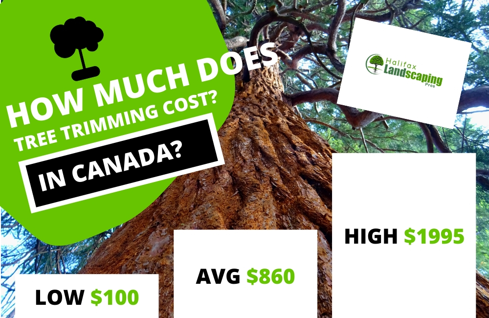 How much does tree trimming cost in canada?