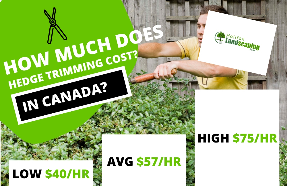 How much does hedge trimming cost in canada?