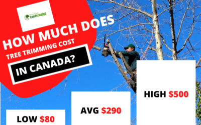 How Much Does Tree Trimming Services cost in Canada?