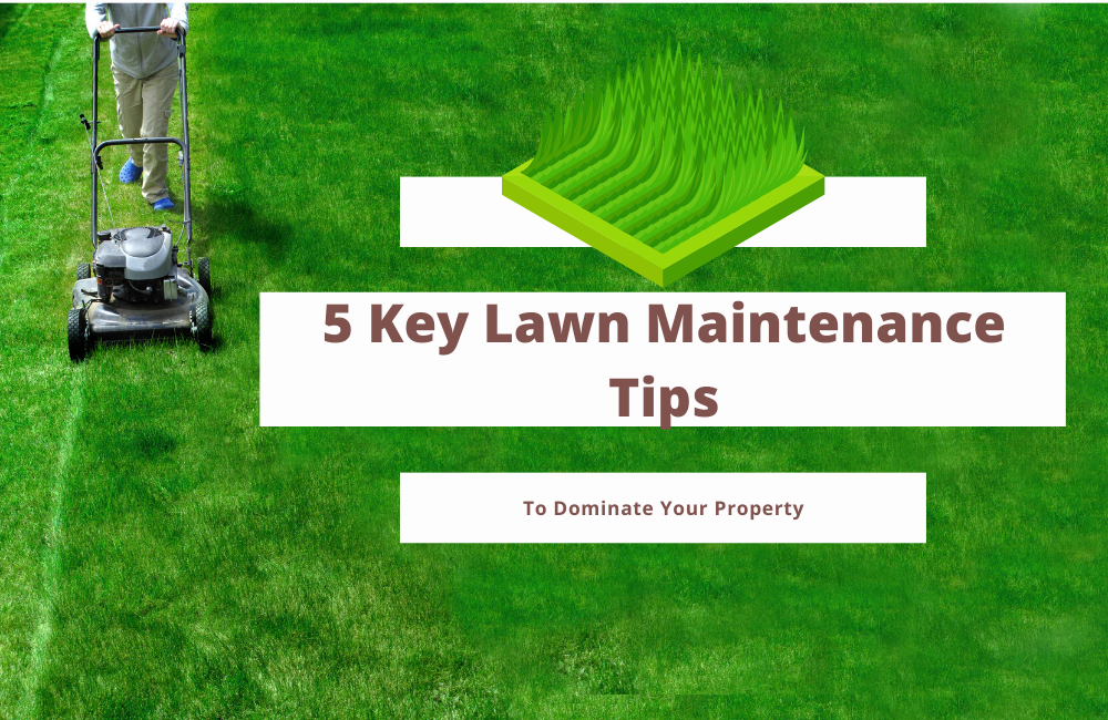 5 Key Lawn Maintenance Tips To Dominate Your Property