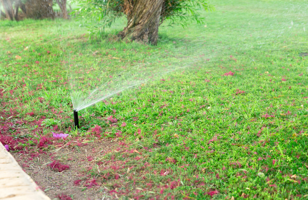 5 Key Lawn Maintenance Tips To Dominate Your Property how often should I water my lawn