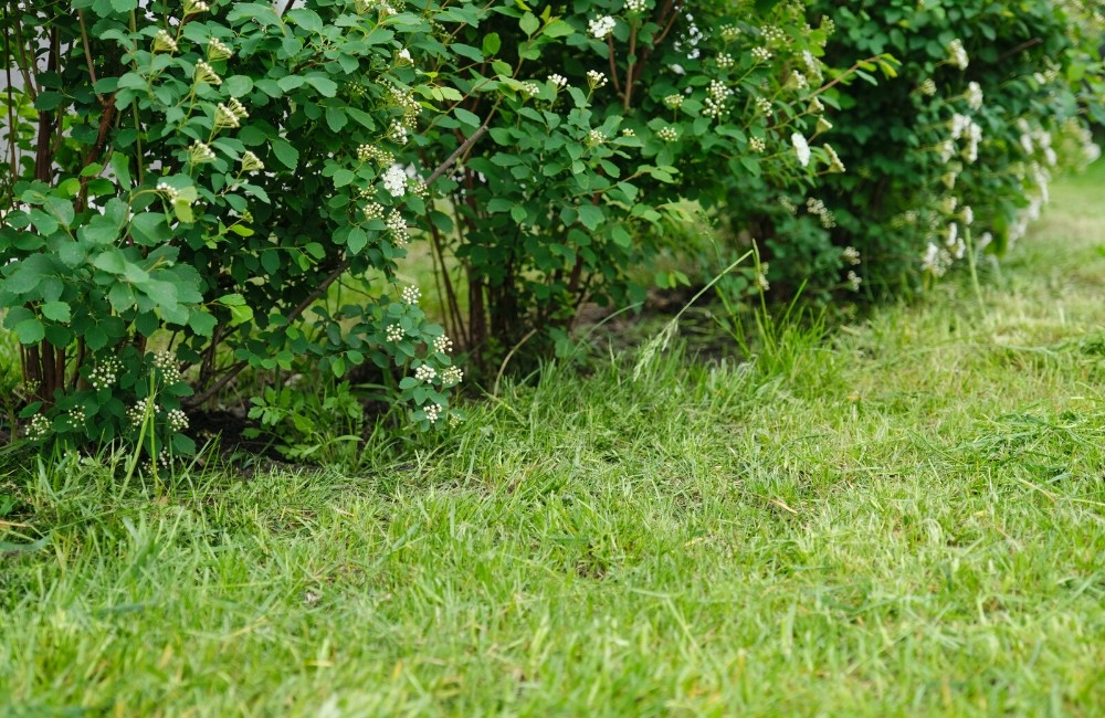 How to Carry Out Early Spring Lawn Care