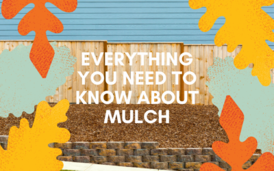 Everything you Need To Know About Mulch