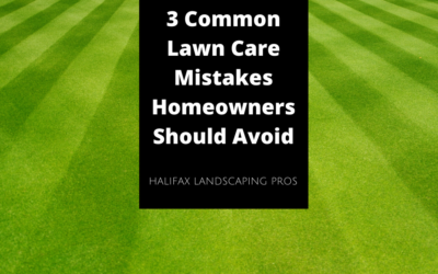 3 Common Lawn Care Mistakes Homeowners Should Avoid