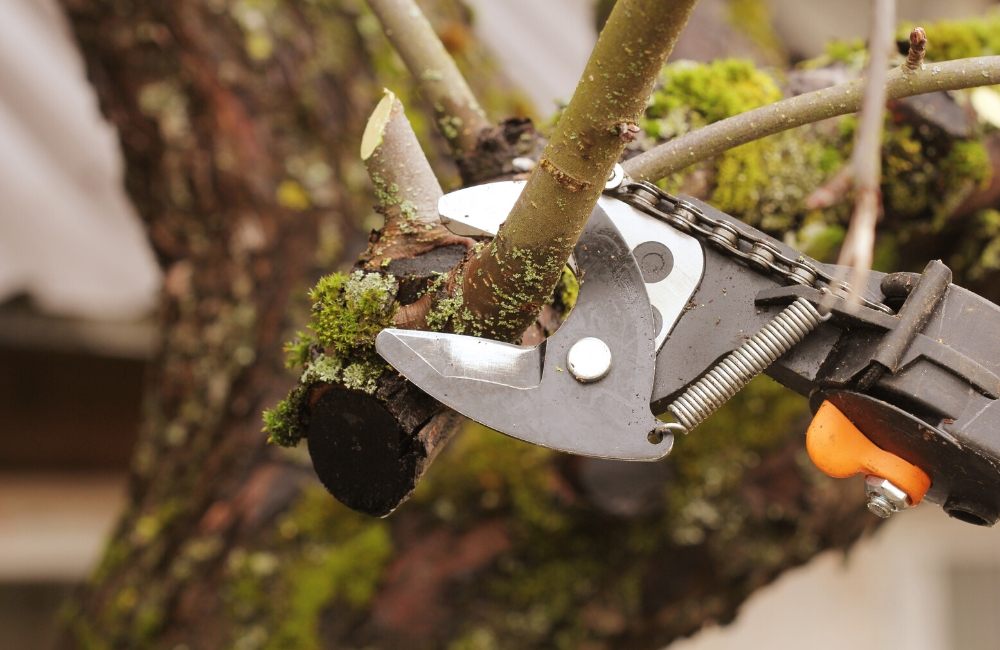 Everything You Need To Know About Pruning