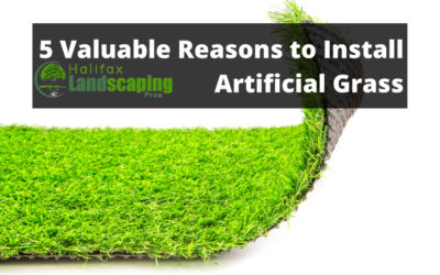5 Valuable Reasons to Install Artificial Grass – What to Know