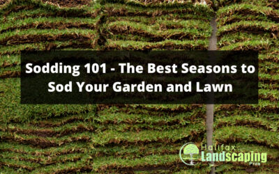 Sodding 101 – The Best Seasons to Sod Your Garden and Lawn