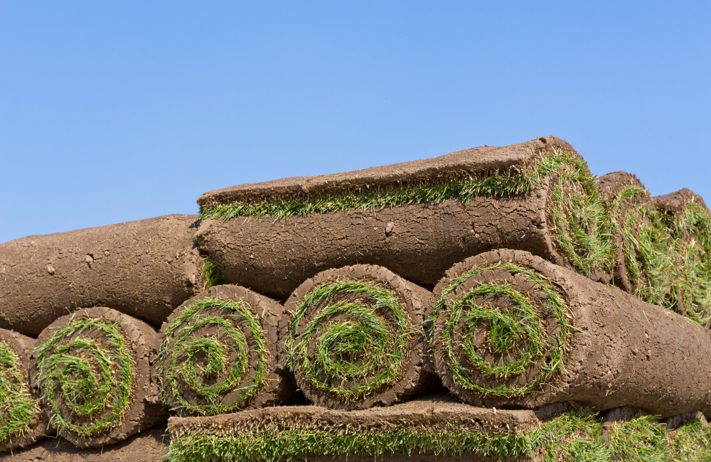 Sodding 101 - The Best Seasons to Sod Your Garden and Lawn