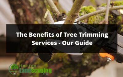 The Benefits of Tree Trimming Services – Our Guide