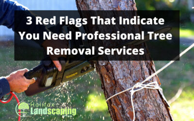 3 Red Flags That Indicate You Need Tree Removal Services