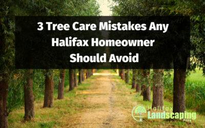 3 Tree Care Mistakes Any Halifax Homeowner Should Avoid