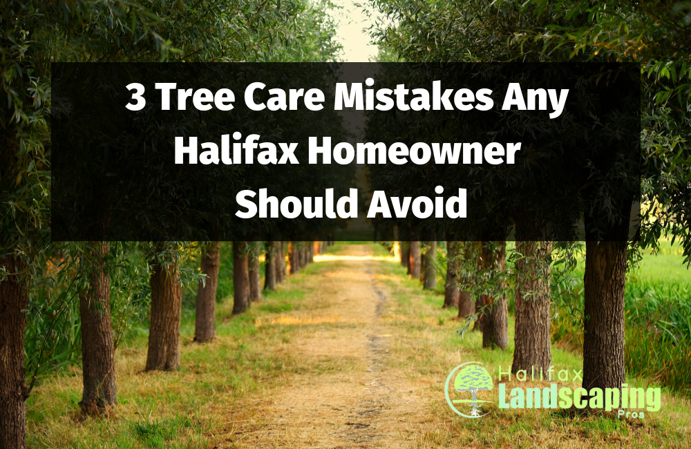 3 Tree Care Mistakes Any Halifax Homeowner Should Avoid